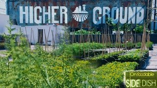 On Foodable Side Dish: Farm-to-Fork — Exploring Boston's Rooftop Farms