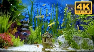 You Won't Believe How Good the Resolution is in this Aquarium Video!