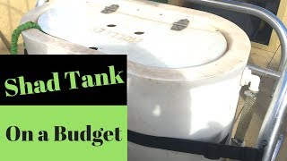 Shad Tank On a Budget (Part 1)