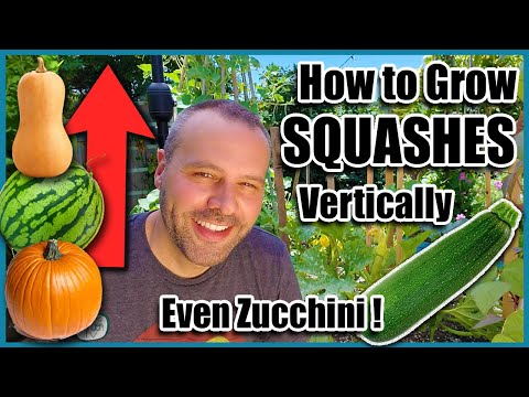 how-to-grow-squash-vertically...even-zucchini!-small-space-gardening.
