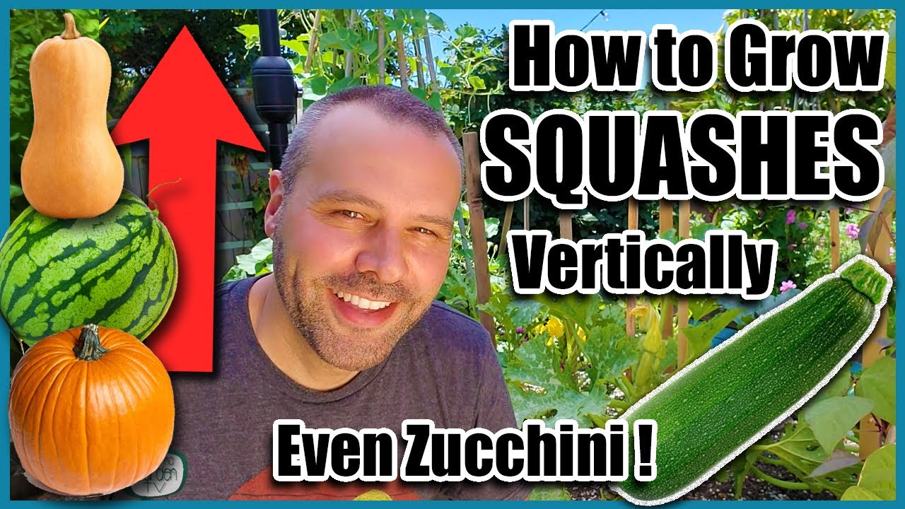 How to Grow Squash Vertically...EVEN ZUCCHINI! Small Space Gardening.