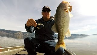Bass Fishing With Underspins: Big Bass on Small Baits