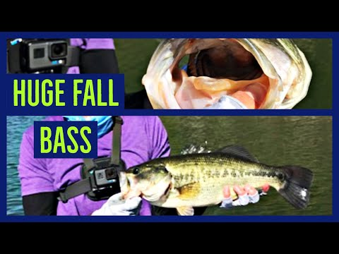 (big One!)Cottage Grove Reservoir Fall Bass Fishing 10-6-19
