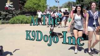K9dojo: Toronto Down Stay Walk With Israel 2012