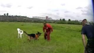 Д. Фатин Давление на собаку часть 2