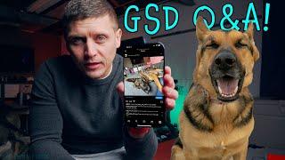 German Shepherd FAQ - Answering Your Questions!