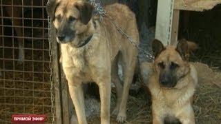 Деятельность фирмы по отлову бездомных собак в Екатеринбурге проверит прокуратура