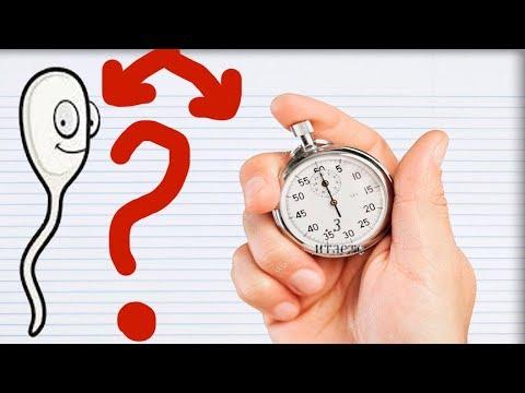 СКОЛЬКО ЖИВУТ СПЕРМАТОЗОИДЫ? Какова Активность Сперматозоидов?