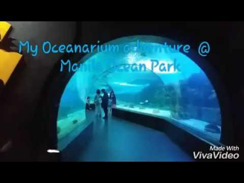 Manila Ocean park Adventure ( Oceanarium)