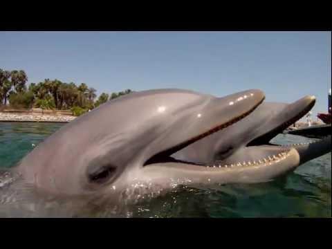 Bañarse / nadar con delfines. Swimming with Dolphins  Imágenes bañándose, delfinario, delfín HD