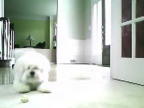 Scoofy Flipping Out
