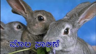Rabbit Rearing in India (Mola) - Kannada