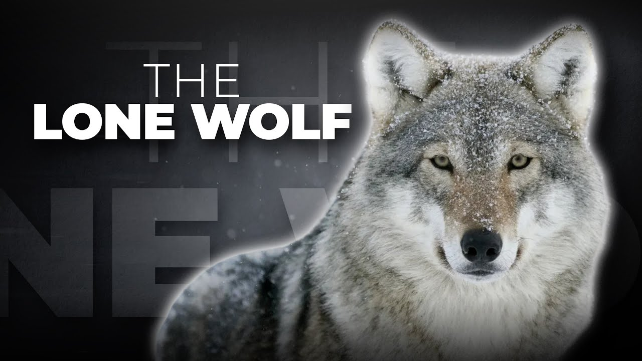 What is a lone wolf