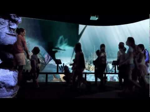 Megalodon Exhibit TV Spot At NC Aquarium At Fort Fisher