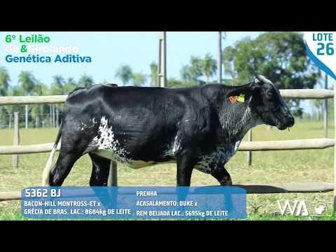 LOTE 26 - 5362 BJ - 6º Leilão Gir & Girolando Genética Aditiva