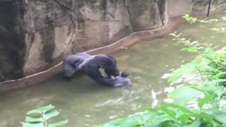 HD | Gorilla Grabs Child That Fell Into Cincinnati Zoo Enclosure
