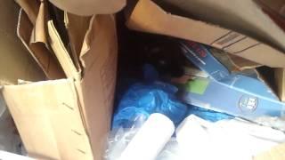 Кошка в мусоре компания на 5 (351) 248-28-90