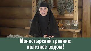 Монастырский травник: полезное рядом!