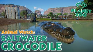 10 Minutes Of Saltwater Crocodile No Talk \ Planet Zoo Animal Watch \ JQLeeJQ Games