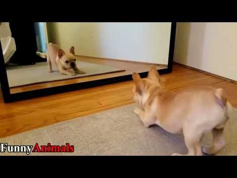 Funny Cat & Dog Vines compilation 2017