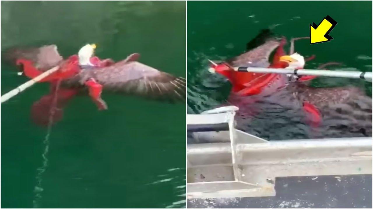 EL PODER DEL PULPO | Pulpo vs Tiburón, Aguila, Anguila