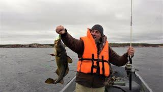 Рыбалка с китами белухами и охота в Карелии. Белое море.