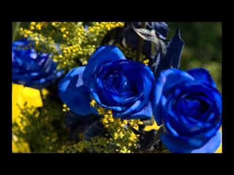 Blue Rose Is     Pam Tillis