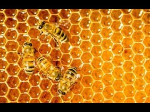 Scientists found bee-killing neonicotinoids in 75% of honey sampled from around the world