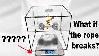 If a Weight Drops In a Closed Container Does the Total Weight Decrease? Most People Get This Wrong!