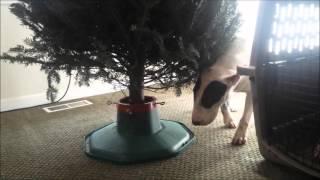 Bull Terrier Trancing thumbnail