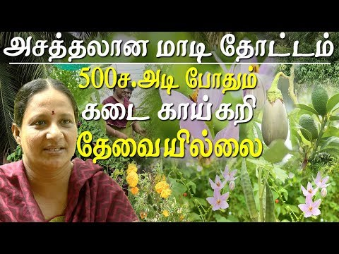 Agriculture and organic farming - high yielding organic terrace garden at chennai