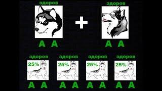 Катаракта у собак. Наследование катаракты у собак.