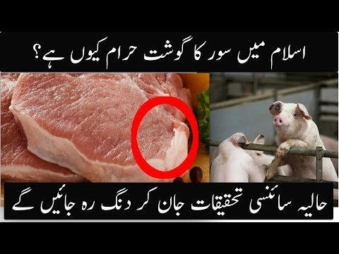 why Pork Meat Is Haram In Islam  Scintific Research Conforms Today  Urdu  HIndi