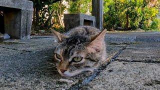 地面に寝そべる野良猫をナデナデしてきた