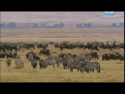 Un Insólito Edén - El Cráter  de Ngorongoro