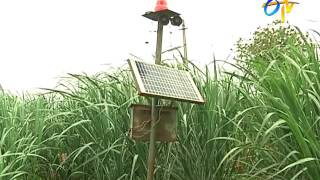 Protective measures in agriculture fields for wild animals - solar fence, solar sound system