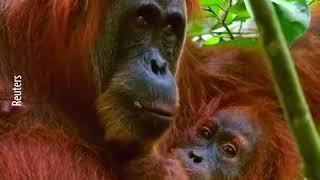 В мире гибнет все больше животных, и в этом виноват человек