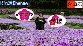 【日本景點】兵庫縣三田市.花のじゅうたん(花之絨毯),全國為數不多的芝櫻專門庭園! Japan Vlog