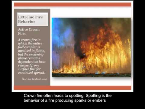 Lesson 4: Fire Behavior
