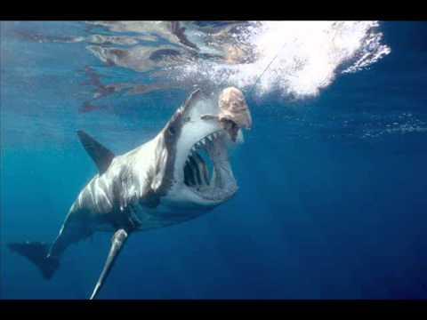 Самая большая акула в мире фото фото 613-230