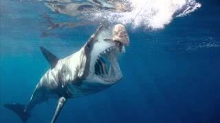 самая большая акула в мире заснята живой (НОВОЕ 2014)!!!