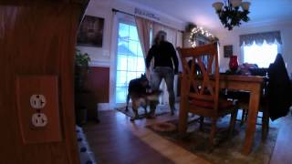 Olympia Kennels / Home Protection Dog (chester Nh)