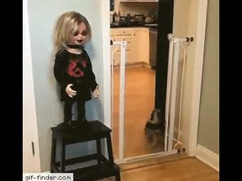 Jake Dill - Dog Afraid of Chucky Doll
