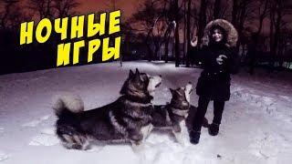 Зимние игры для собак