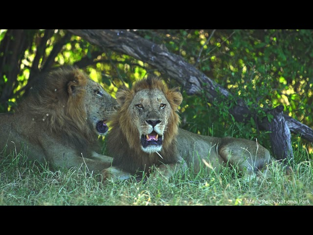Zimbabwe's Official Destination Video 2021