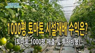 토마토농사 시설재배 1000평 연매출 & 투자비…