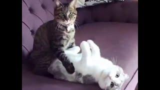 🐈 Неприлично смешные кошки-2! 🐈 Подборка смешного видео с кошками для хорошего настроения! 😺