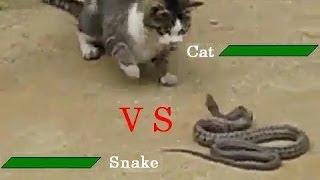 Кот vs Змей!  Чья возьмет? (прикольное видео)(Оказывается кошки могут охотиться не только на мышей Темы канала: супер прикол , смешное видео , свежие..., 2013-11-03T10:14:34.000Z)