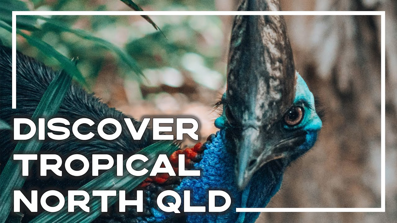 Amazing Adventures In Tropical North Queensland 🇦🇺 (Inc Top Things To Do) | Backpacker Banter