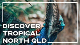 Amazing Adventures In Tropical North Queensland - Backpacker Banter